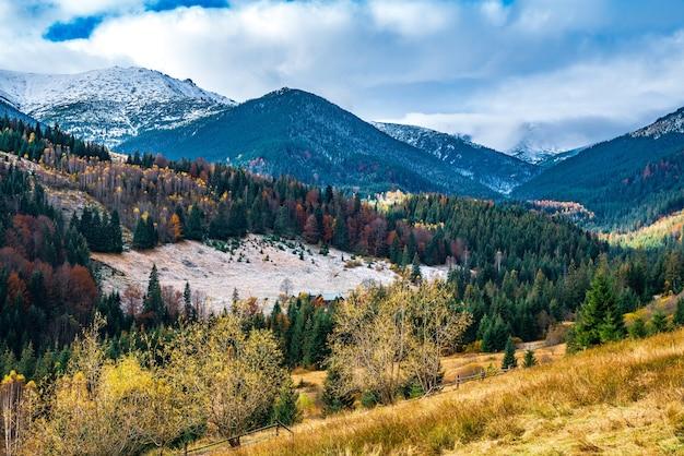 ウクライナの珍しい自然の中で素晴らしい暖かい秋にカルパティアの森で森林破壊