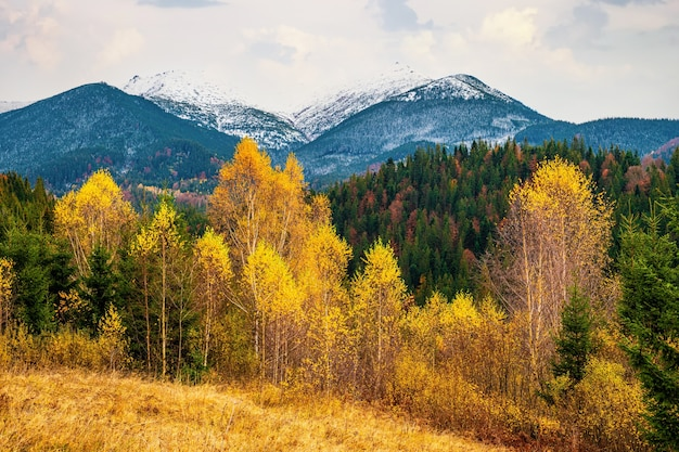 Вырубка лесов в горах карпат, вид в прекрасный пасмурный теплый день