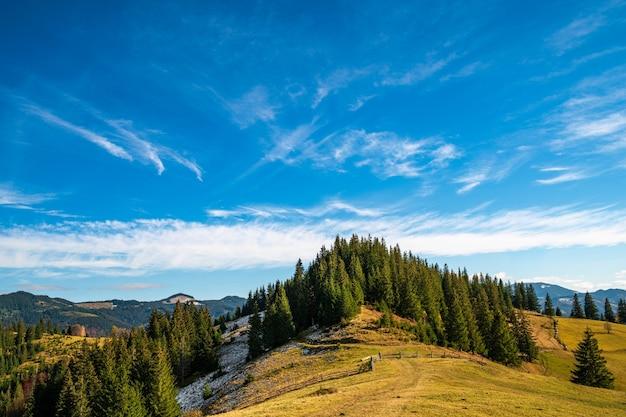 カルパチアの山々の森林破壊、美しい曇りの暖かい日を眺める