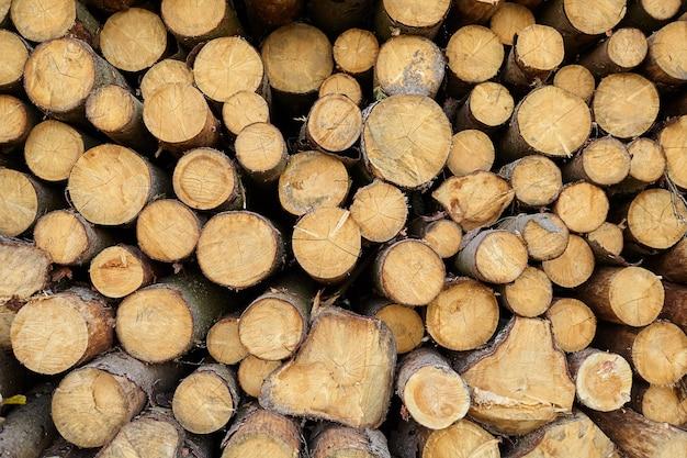 Вырубка леса. лесозаготовки ñ лиственные деревья. фон из бревен. древесина - возобновляемый источник