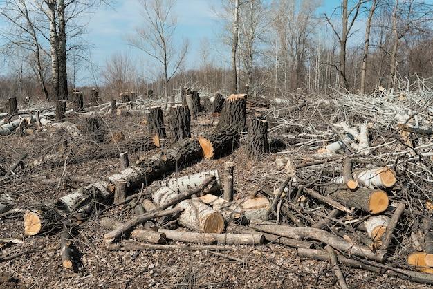 삼림 벌채. 나무 절단 영역입니다. 재목.