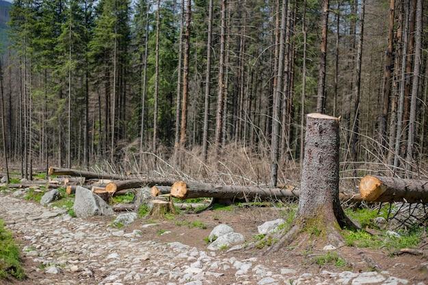 ポーランド、タトラ山脈の伐採された木がある森の森林破壊地域
