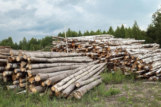 Обезлесенный сруб дерева в лесу