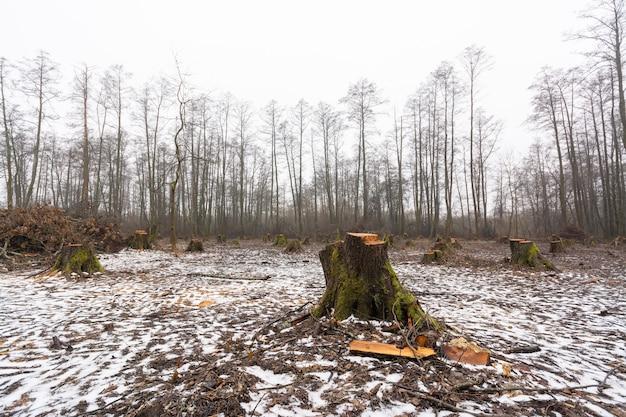 冬の森林破壊された森林地帯
