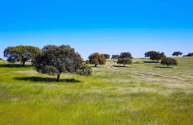 Dehesa grassland by via de la plata spain