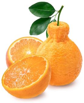 Апельсины декопон с изолированными листьями