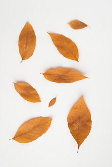 Delicate autumn leaves on white
