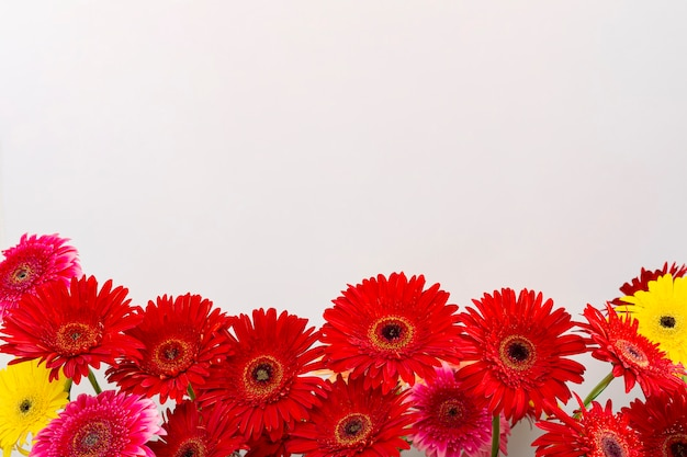 Delicate beautiful gerbera flower laid out from bottom on white background, flat lay and top view, close-up with place for text.