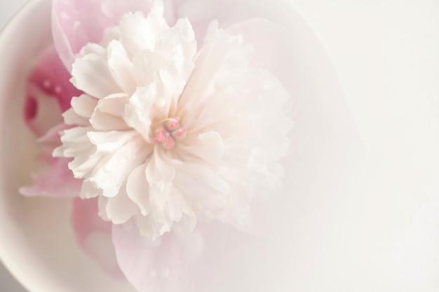 花びらに水滴が付いた繊細なピンクの牡丹の花