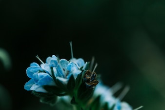 Delicate blue flower at night