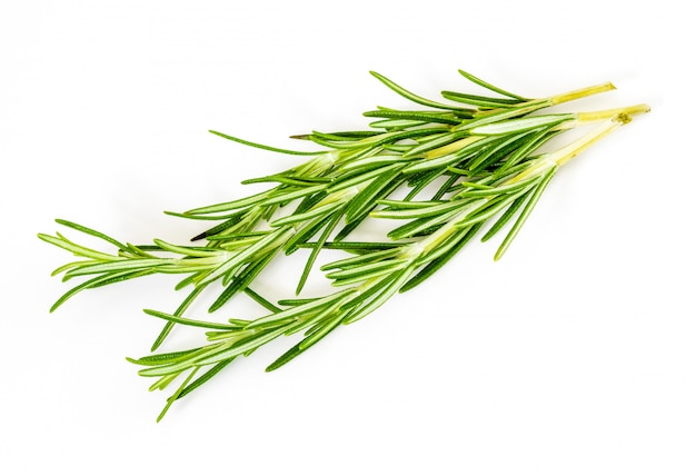 Delicate branches of rosemary.