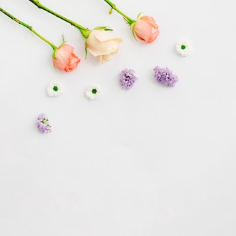 Delicate colorful flower on white background