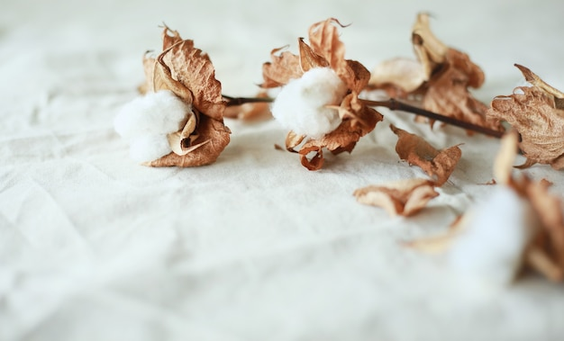 Нежные цветы хлопка на фоне белой хлопковой ткани. идея одежды из органического хлопка.