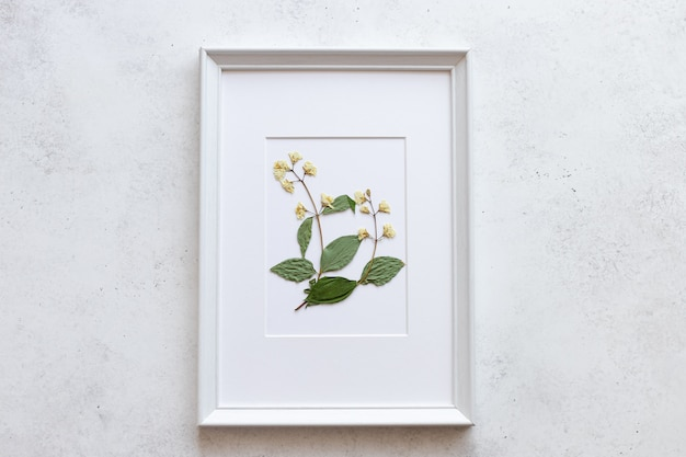Delicate dried flower in a white frame on a white concrete wall. botanical illustration. floral design. handmade home decor.