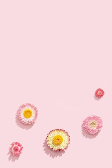 Delicate dry flowers, pink blossoms. natural flowery pattern, pastel colored, abstract in nature