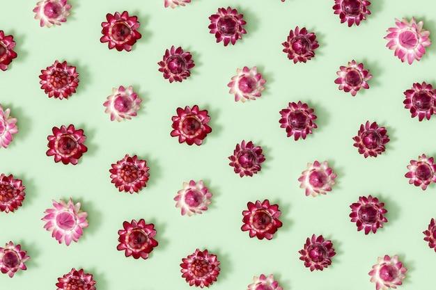 섬세한 마른 꽃, 붉은 꽃, 식물 표본 상자를 닫습니다. 자연 꽃 패턴, 파스텔 컬러, 추상 자연