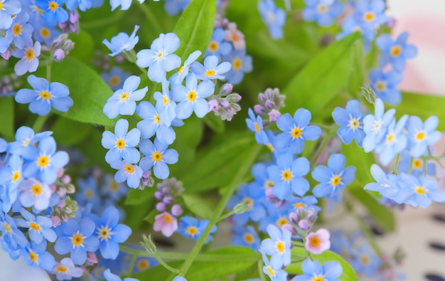 Delicate flowers forget-me-not