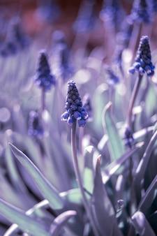 ライラック色の繊細な花