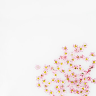 Delicate fresh flowers on white background