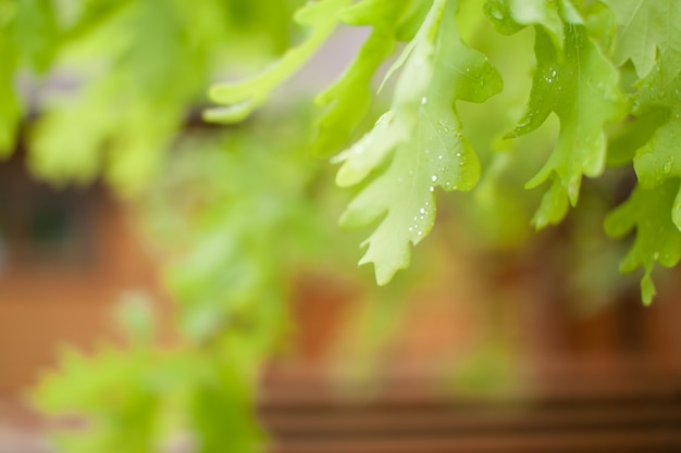 봄 햇살 가득한 날 공원에 있는 섬세하고 신선한 녹색 오크 잎