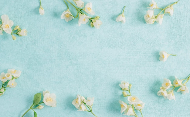 Delicate jasmine flowers on a blue background