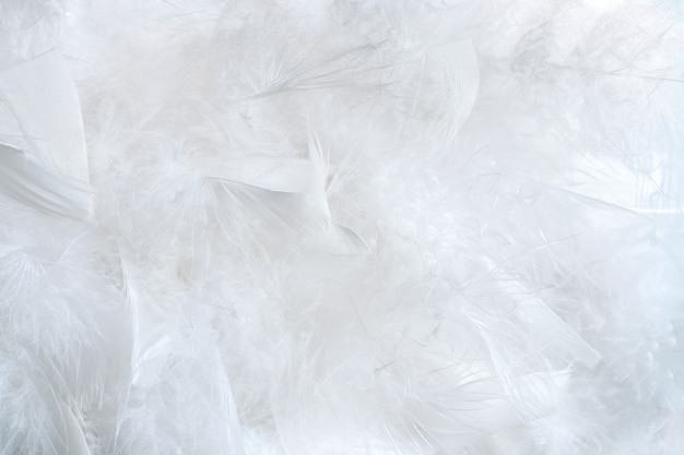 Delicate natural white background of a lot fluffy bird feathers.