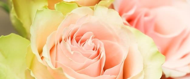 Нежные нежно-розовые розы идеально подходят для фоновых поздравительных открыток и свадебных приглашений на день рождения