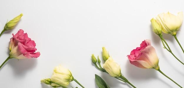 白い背景で隔離の繊細なピンクとクリーム色のトルコギキョウ。花のフレームとコピースペース。母の日と女性の日のコンセプト。高品質の写真