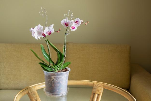 홈 인테리어에 섬세한 분홍색과 흰색 난초. 화초 재배, 취미, 가정 꽃.