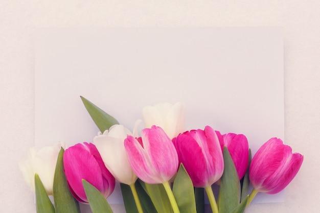 明るい背景に繊細なピンクと白のチューリップ