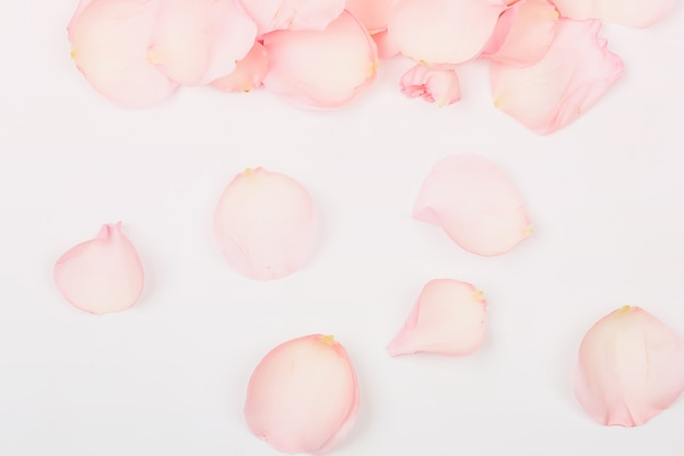 Нежный розовый фон с лепестками роз
