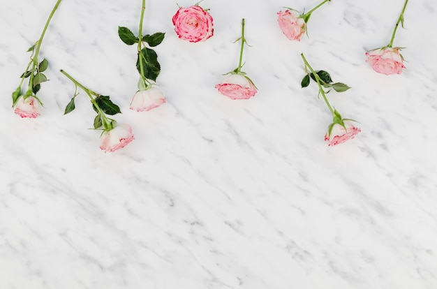 Delicate pink flowers with copy space