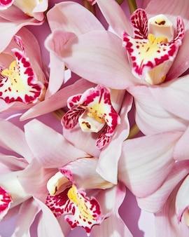 繊細なピンクの蘭の花の背景