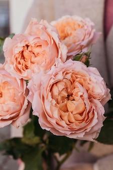 女性の手に繊細なピンクの牡丹のバラ