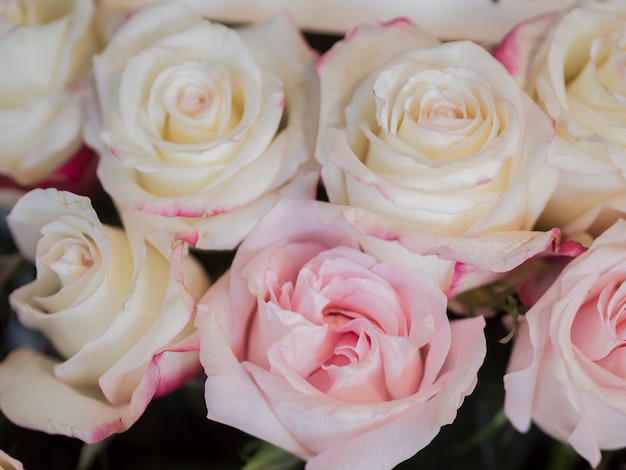 Delicate pink rose bouquet close up