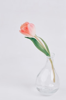 Delicate pink tulips in a glass vase. scandinavian-style . beautiful greeting card. the minimal concept.