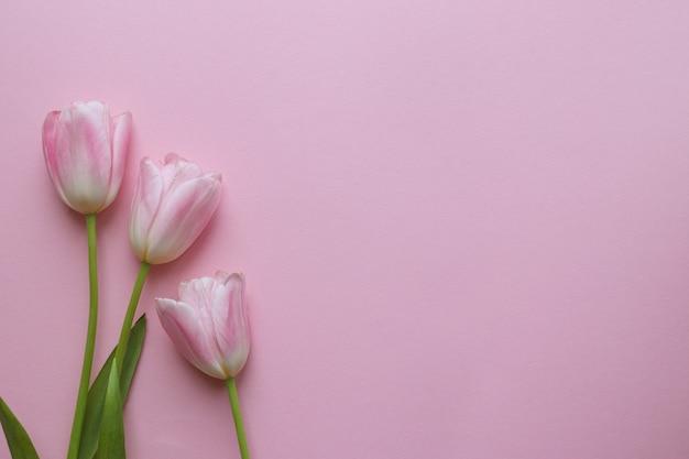 繊細なピンクのチューリップ春のコンセプト