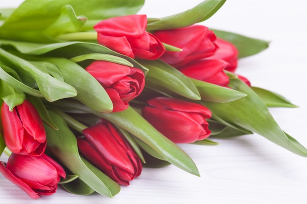 Delicate red tulips on a white
