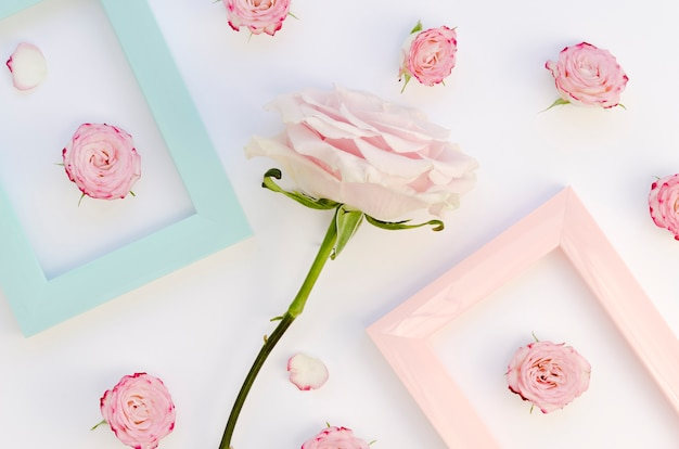 Delicate roses and frames flat lay