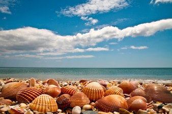 Delicate seashells on beach with blue sky and ocean in background