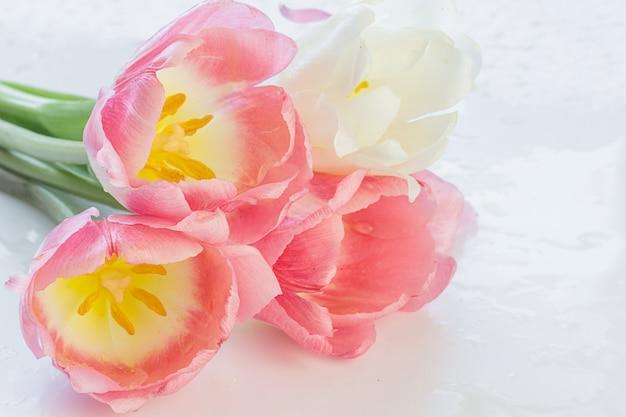 ピンクのチューリップと繊細な柔らかなパステルカラーの背景がクローズアップ