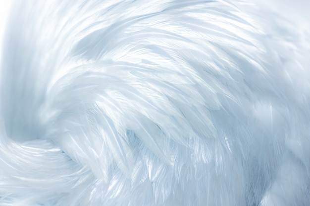 Delicate soft white bird feathers as a background or backdrop