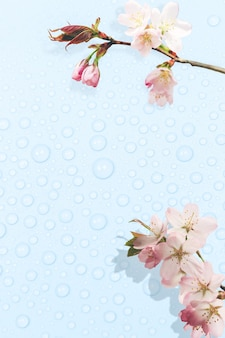Delicate spring blue background with dew drops and blossoming tree branches
