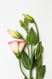 白い背景の上の繊細な春の花