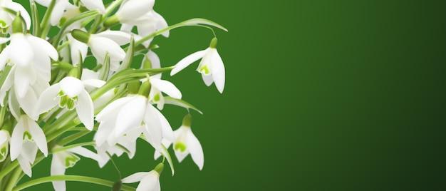 繊細な春の花のスノードロップ。春の花の背景。
