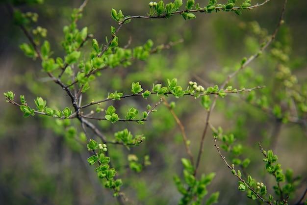 Delicate spring greens, blurred background, soft selective focus. natural plant background