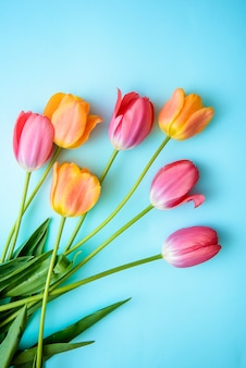 Delicate tulips on blue