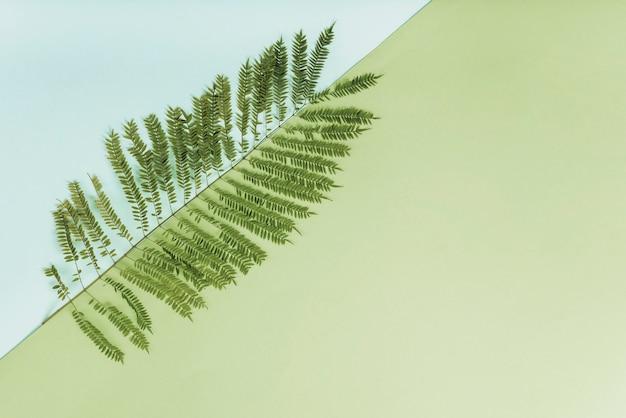 Delicate twig of fen