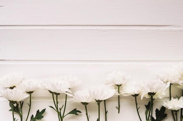 Delicati fiori bianchi allineati davanti a uno sfondo bianco con spazio sulla parte superiore