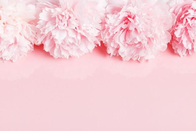 분홍색 배경에 꽃잎 꽃이 있는 섬세한 흰색 분홍색 모란. 오버 헤드 평면도, 평면 누워. 공간을 복사합니다. 생일, 어머니, 발렌타인, 여성, 결혼식 날 컨셉입니다.